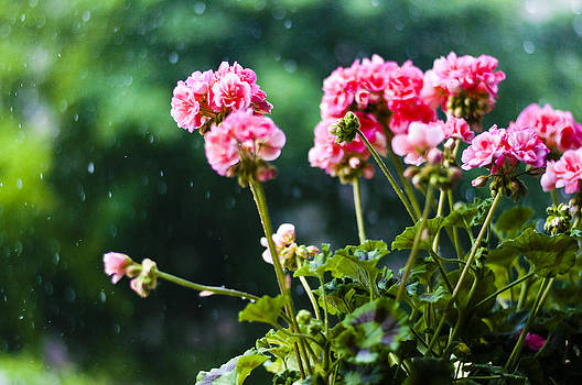 Rainy Summer Time by Yevgeni Kacnelson