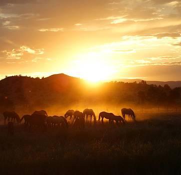 Ranch Sunset by Kasie Morgan