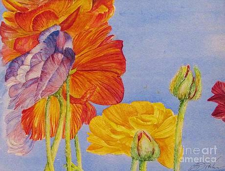 Ranunculus Heaven by Beth Fischer