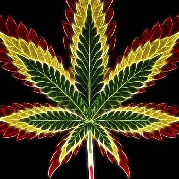 Adam Romanowicz - Rasta Marijuana
