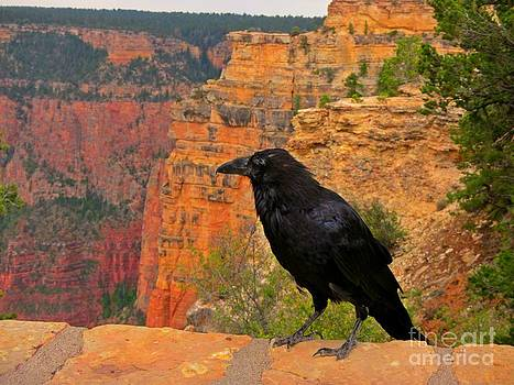 John Malone - Raven at the Grand Canyon