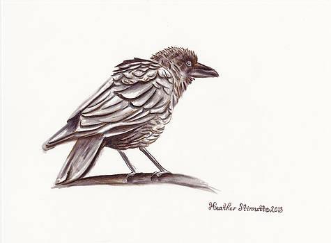 Raven by Heather Stinnett