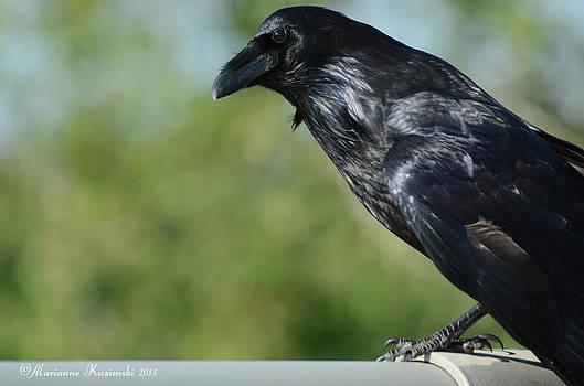 Marianne Kuzimski - Raven Hello