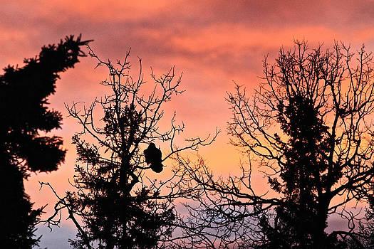 Raven Sunrise 2 by Donna Quante