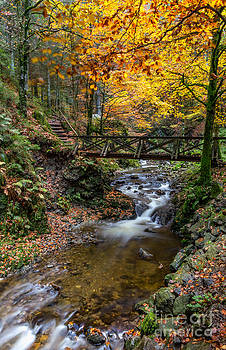 Ravennaschlucht - Cascades and Waterfalls II by Bernd Laeschke
