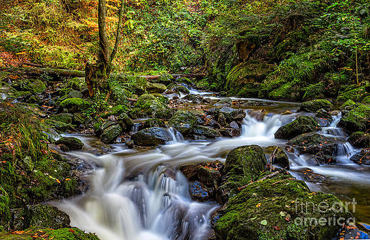Ravennaschlucht - Cascades and Waterfalls I by Bernd Laeschke