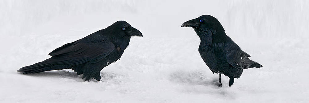 Ravens Rest by Dirk Lightheart