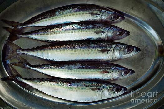 Mythja  Photography - Raw fish