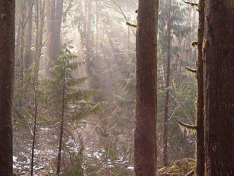 Rays of Light in Forest by Myrna Walsh