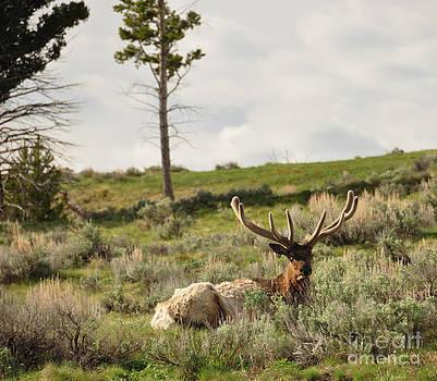 Birches Photography - Reclining Majesty