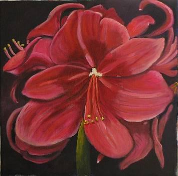 Red Amaryllis by Rebecca Jackson