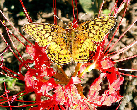 Red Amaryllis with Butterfly by Gerald MacLennon