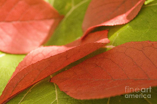 Red and Green by Cynthia Holling-Morris