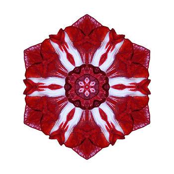 Red and White Amaryllis IV Flower Mandala White by David J Bookbinder