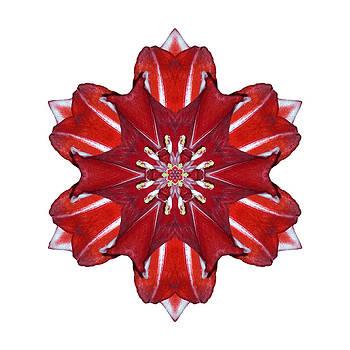 Red and White Amaryllis VII Flower Mandala White by David J Bookbinder