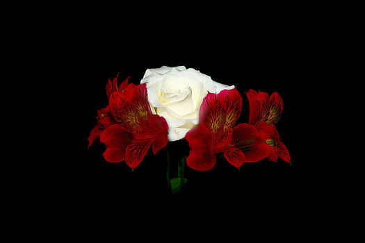 Red and White by Cecil Fuselier