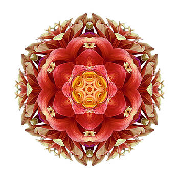 Red and Yellow Dahlia III Flower Mandala Whtie by David J Bookbinder