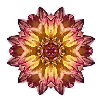 Red and Yellow Dahlia IV Flower Mandala White by David J Bookbinder