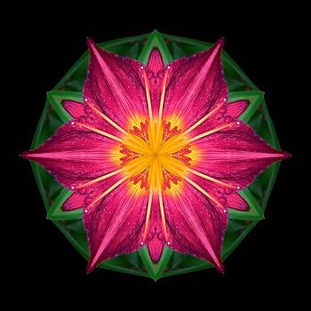 Red and Yellow Daylily I Flower Mandala by David J Bookbinder