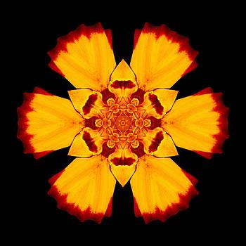 Red and Yellow Marigold II Flower Mandala by David J Bookbinder