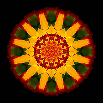 Red and Yellow Marigold V Flower Mandala by David J Bookbinder