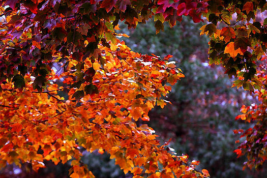 Red Autumn Leaves drybrush by Andy Lawless