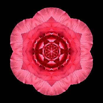 Red Begonia I Flower Mandala by David J Bookbinder
