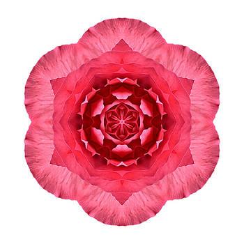 Red Begonia I Flower Mandala White by David J Bookbinder