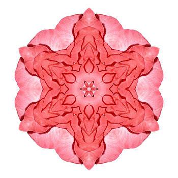 Red Begonia II Flower Mandala White by David J Bookbinder