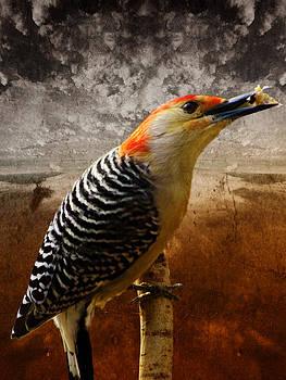 Pamela Phelps - Red-Bellied Woodpecker-Textured Image