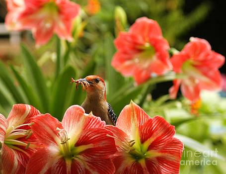 Red Belly Woodpecker Thankful Day by Luana K Perez