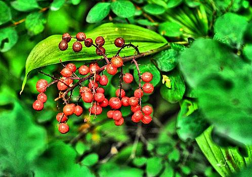 Red Berries by Don Mann