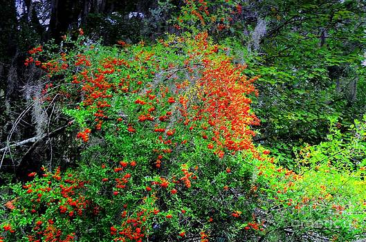 Red Berry Bush by Kathleen Struckle