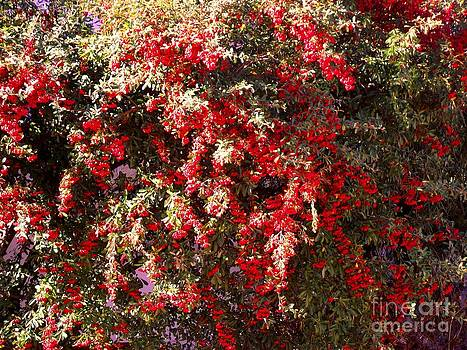 Red Berry Bushes by Jayne Kerr