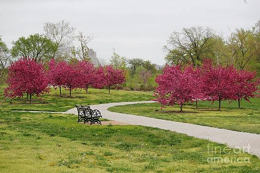 Red Bud Path by Theresa Willingham