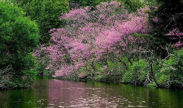 Rosanne Jordan - Red Buds on Lake Marmo