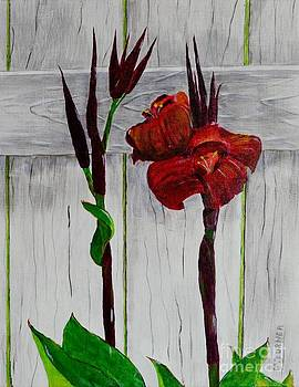 Red Canna Lily by Melvin Turner