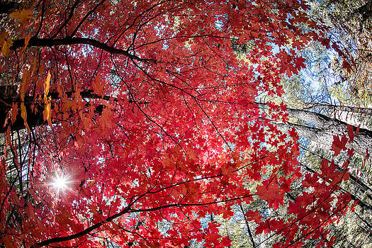 Red Canopy by Larry Pollock