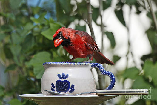 Red Cardinal and Tea by Luana K Perez