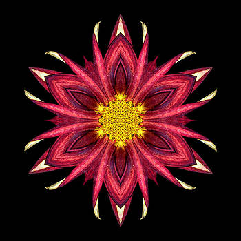 Red Chrysanthemum III Flower Mandala by David J Bookbinder