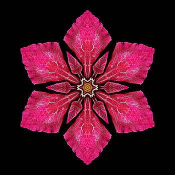 Red Clematis I Flower Mandala by David J Bookbinder
