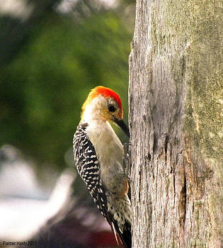 Red Crested Woodpecker Thinking by Palmer Hasty