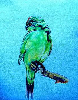 Red Crowned Parakeet by Patricia Howitt