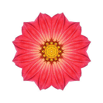 Red Dahlia Hybrid I Flower Mandala White by David J Bookbinder