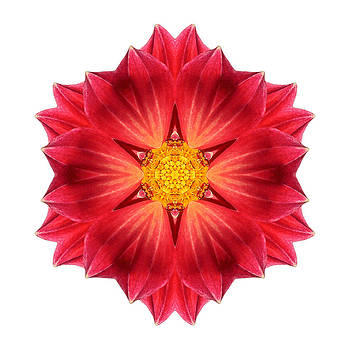 Red Dahlia Hybrid III Flower Mandala White by David J Bookbinder