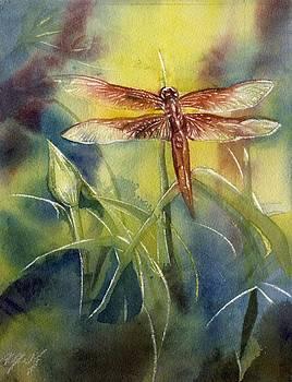 Alfred Ng - red dragonfly
