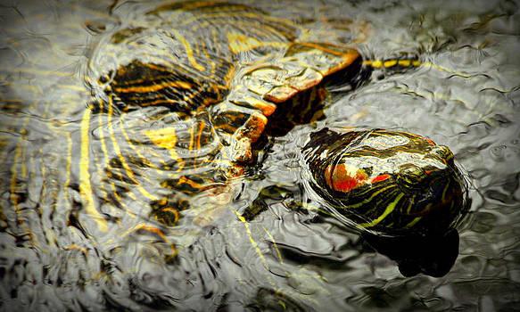 Kathy Peltomaa Lewis - Red-Eared Slider Turtle