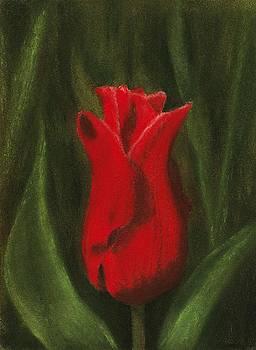 Anastasiya Malakhova - Red Elegance