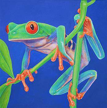 Red eyed treefrog  by Bonnie Golden
