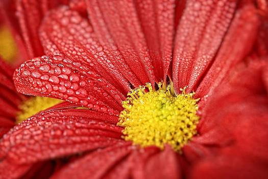 Red Flower by Koji Kanemoto